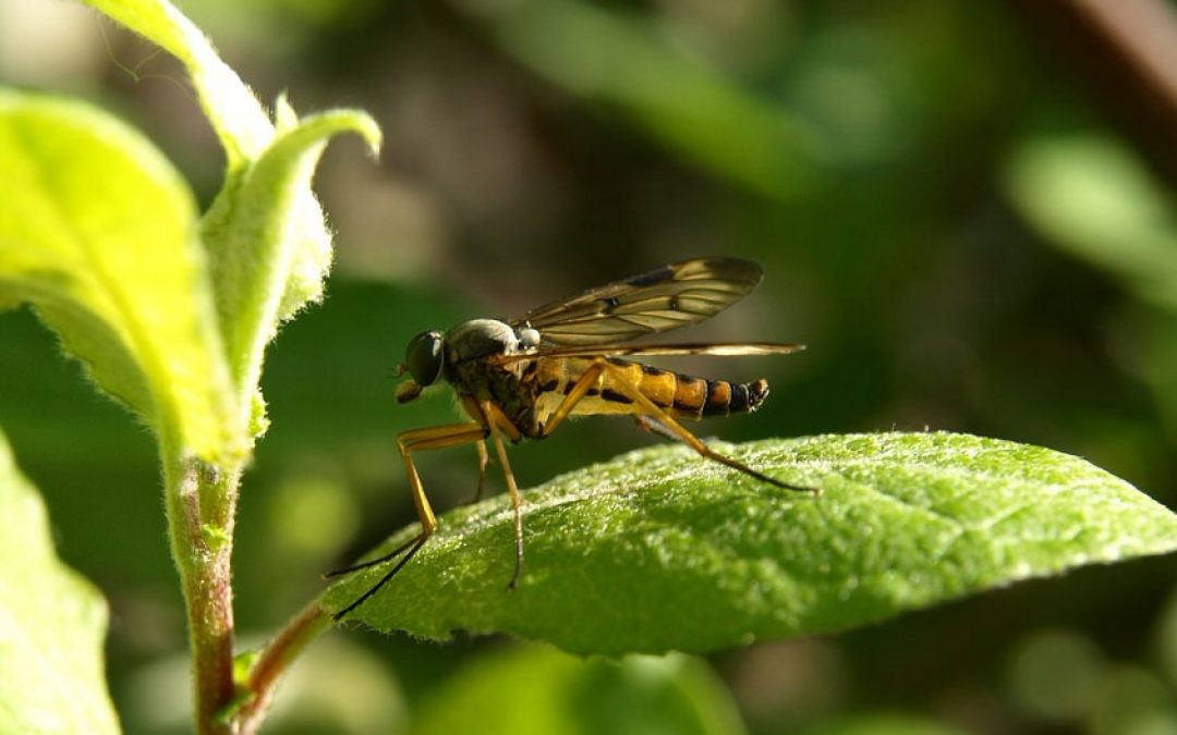 Natural Pest Controls for Your Lawn or Garden