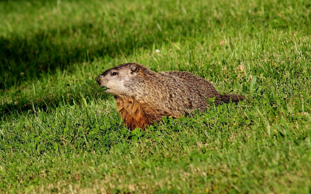 The Groundhog, Our Underground Architect