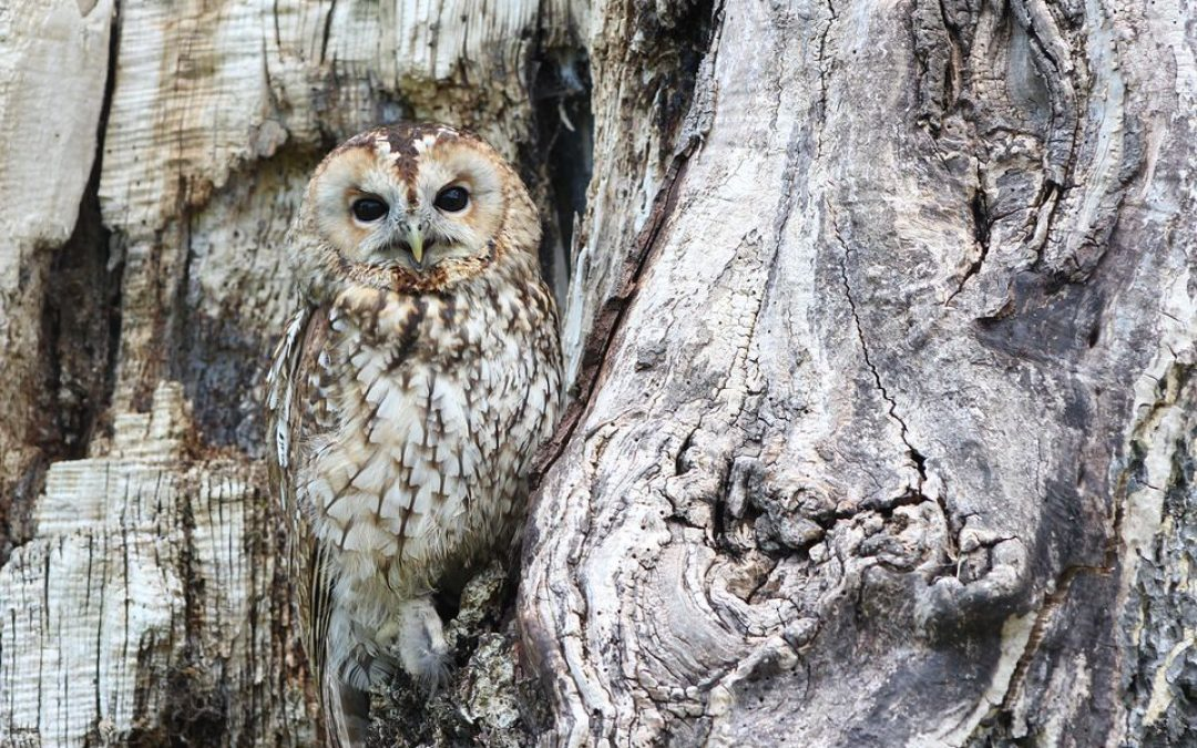 Ways You and Your Family Can Help Wildlife