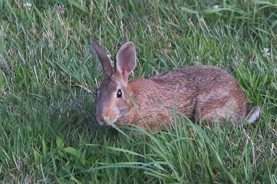 The Bunny and the Warble