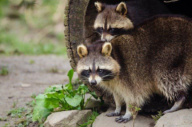 Wildlife Rescue League remains open