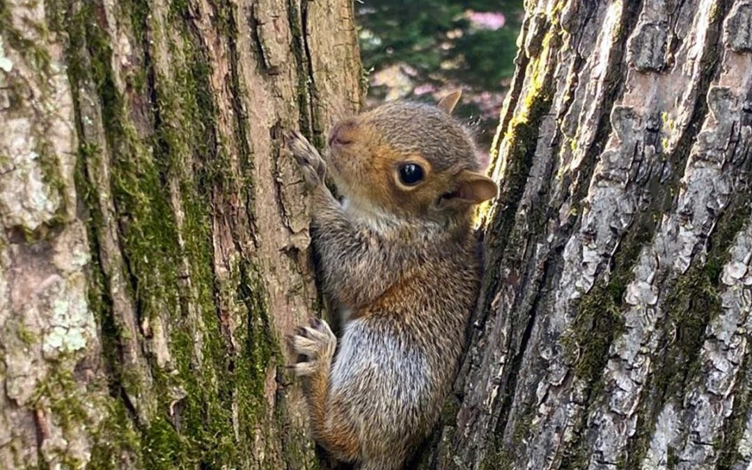 Baby Squirrels Rescue Story