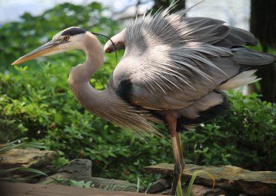 Wildlife Laws in Virginia